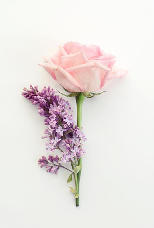 玫瑰,平铺,粉色,母亲节,丁香花,垂直画幅,贺卡,留白,复活节,边框