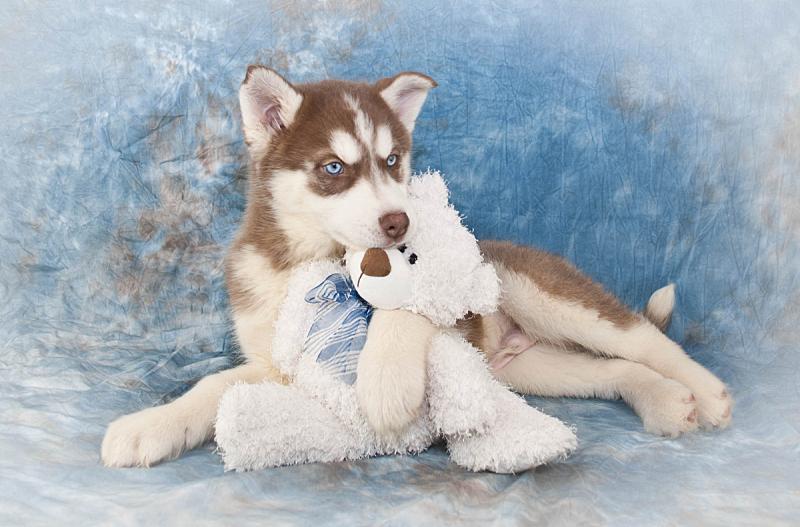 可爱的,友谊,就寝时间,泰迪熊,纯种犬,狗,小的,自然美,动物,犬科的