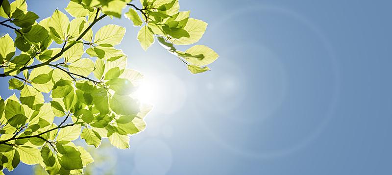 叶子,春天,背景,五月,春季系列,新生活,小树林,日光,山毛榉树,太阳