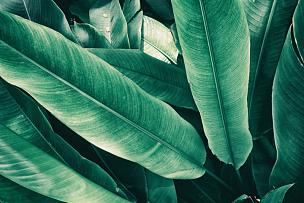 叶子,鸡尾酒,艺术,水平画幅,枝繁叶茂,无人,夏天,海里康属,叶脉,泰国