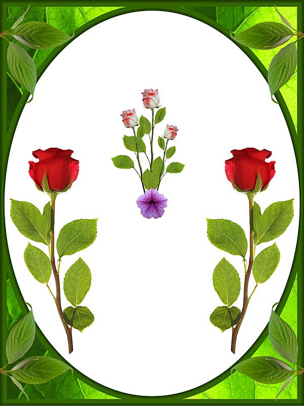 绿色,边框,玫瑰,白色背景,垂直画幅,枝繁叶茂,夏天,白色,植物学