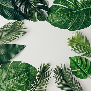 叶子,夏天,自然,计划书,平铺,鸡尾酒,创造力,概念,花,做
