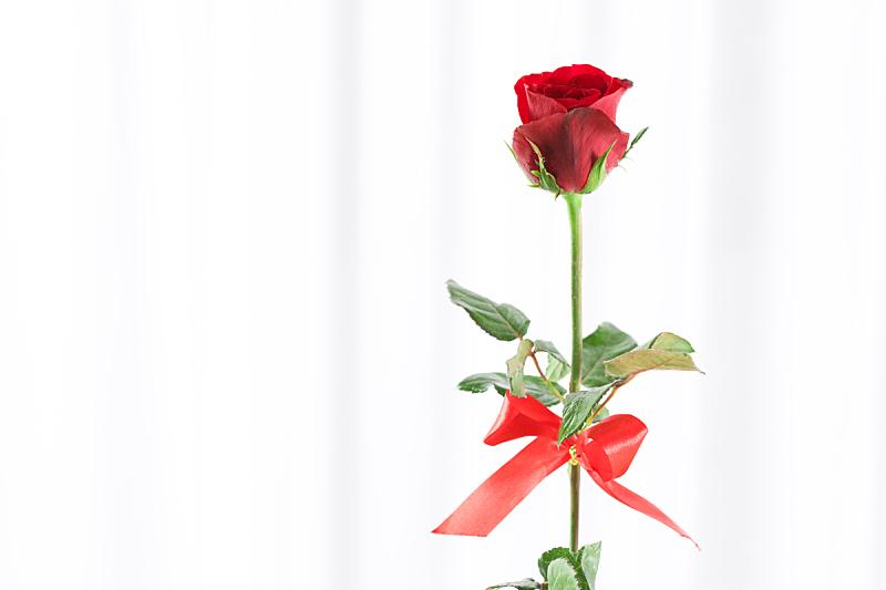 情人节,红色,玫瑰花瓣,留白,美,水平画幅,特写,泰国,花束,植物