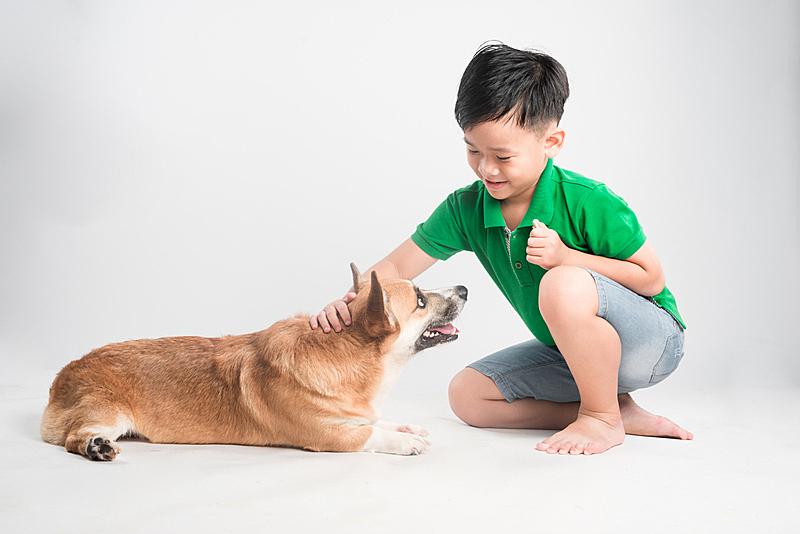 可爱的,男孩,白色背景,狗,白色,宠物,越南,背景分离,生活方式,图像