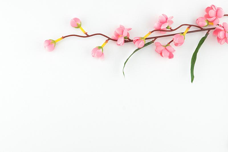 人造的,粉色,枝,白色背景,留白,美,水平画幅,纺织品,樱花,樱桃