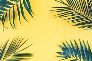 棕榈叶,夏天,黄色背景,在上面,概念,平铺,风景,鸡尾酒,留白,构图