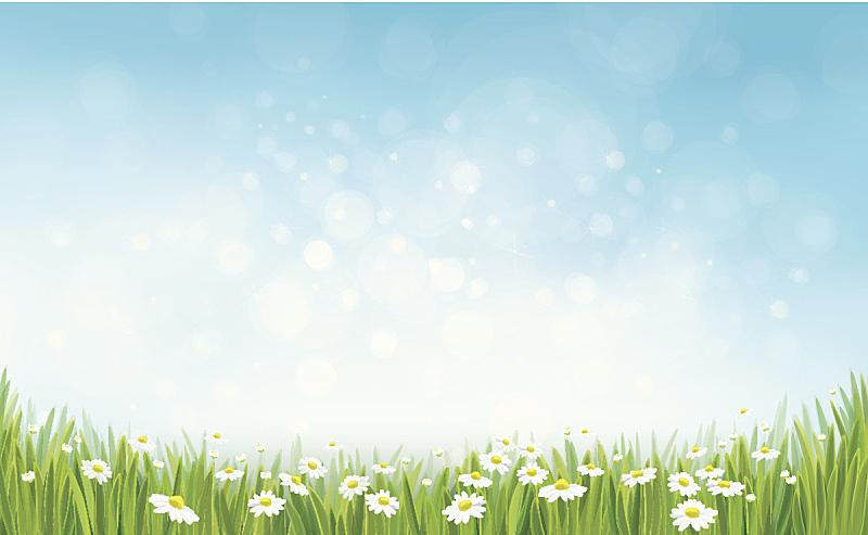 天空,草,矢量,背景,复活节,边框,无人,绘画插图,甘菊花,草坪