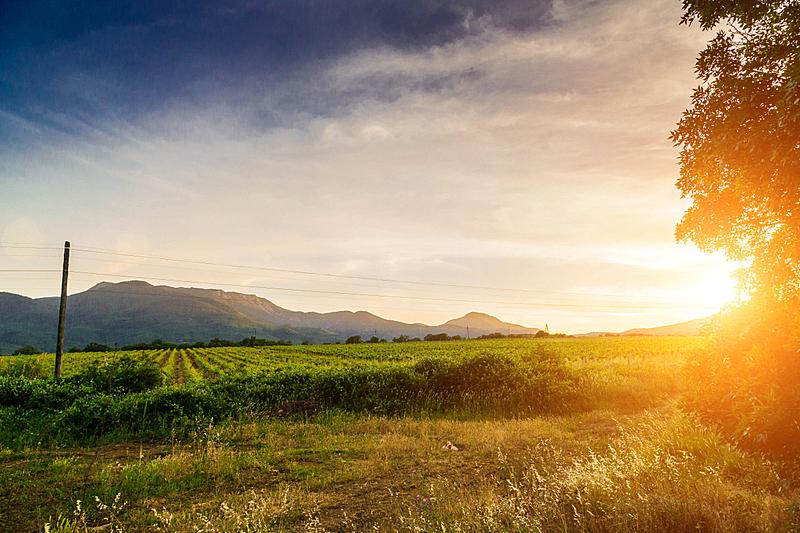 山,葡萄园,远距离,自然,天空,葡萄酒厂,水平画幅,地形,无人,泥土