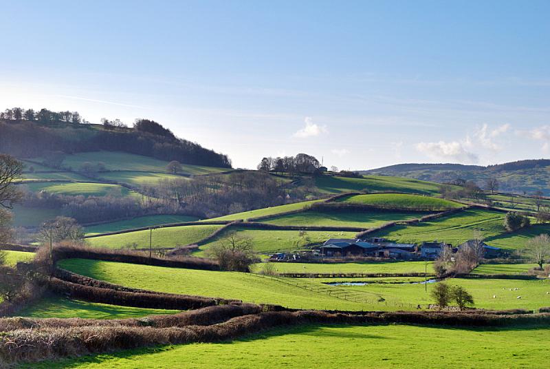 绿色,枝繁叶茂,英格兰,自然,非都市风光,水平画幅,树篱,地形,山,无人