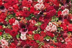 背景,水平画幅,无人,紫苑,夏天,玫瑰,花束,植物,叶子,花头