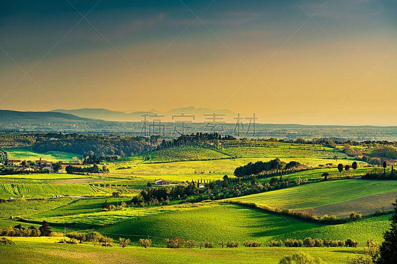 托斯卡纳区,地平线,地形,意大利,近海岸牧羊犬,厄尔巴岛,bibbona,绿橄榄,天空,美