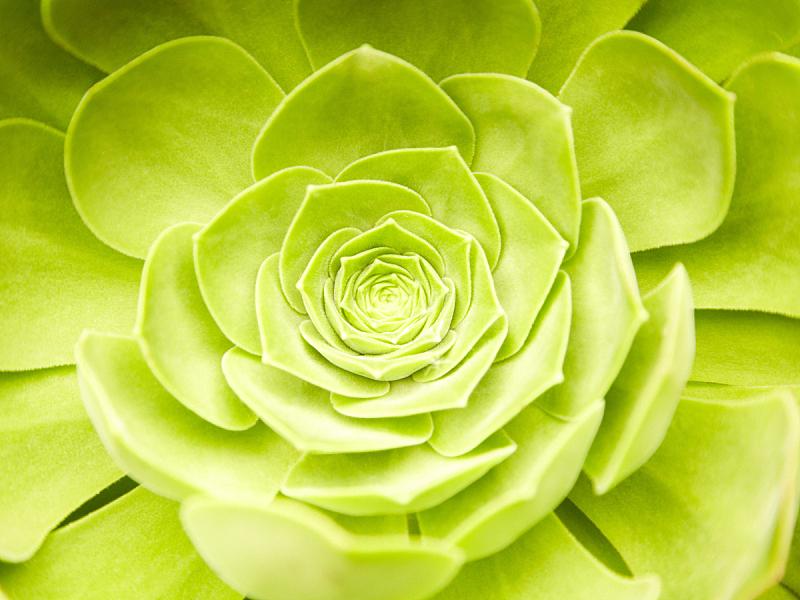 肉质植物,特写,绿色,热带气候,园艺,概念和主题,概念,活力,纯净,宁静