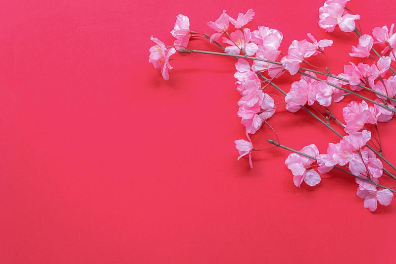 书桌,粉色,花朵,背景,极简构图,家庭工作间,红杉,文字,设计,装饰