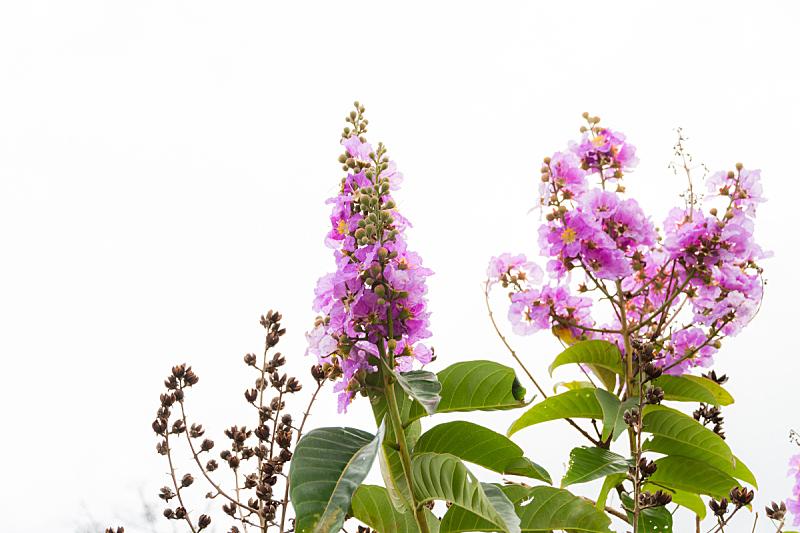 花束,粉色,自然,水平画幅,无人,清新,户外,叶子,摄影,树