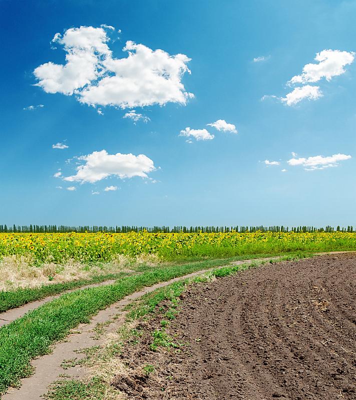天空,田地,农业,蓝色,路,云,在下面,垂直画幅,山,无人