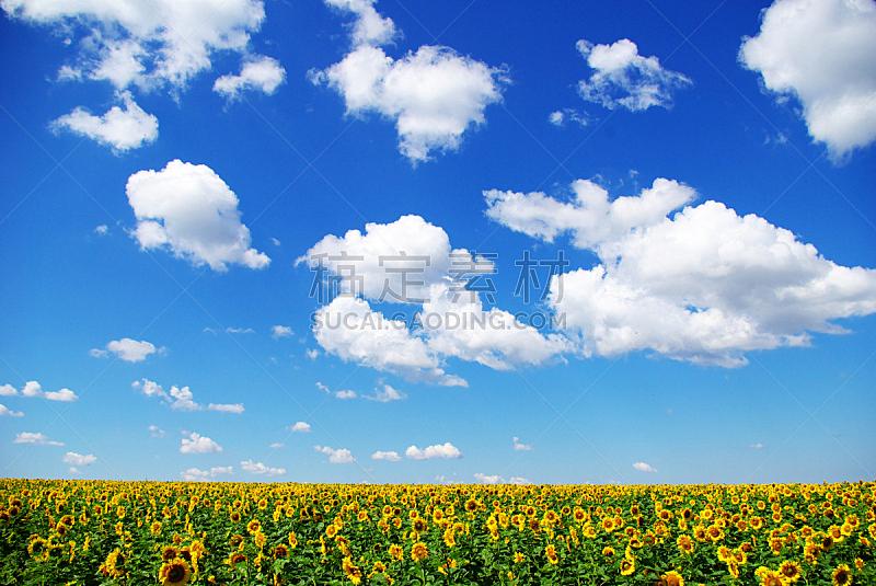 天空,田地,蓝色,向日葵,水平画幅,无人,夏天,户外,植物,阳光光束
