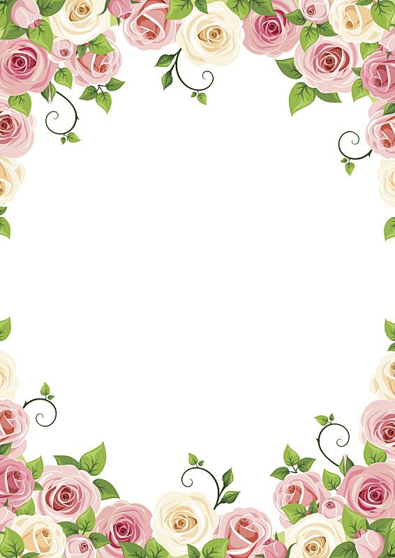 玫瑰,粉色,白色,矢量,背景,卷须,花头,边框,花蕾,花朵