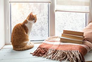 猫,白色,红色,窗台,窗户,热,书,雪,咖啡,宠物