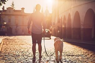 狗,早晨,遛狗师,宠物牵引带,拉布拉多犬,布拉格,捷克,背面视角,仅男人