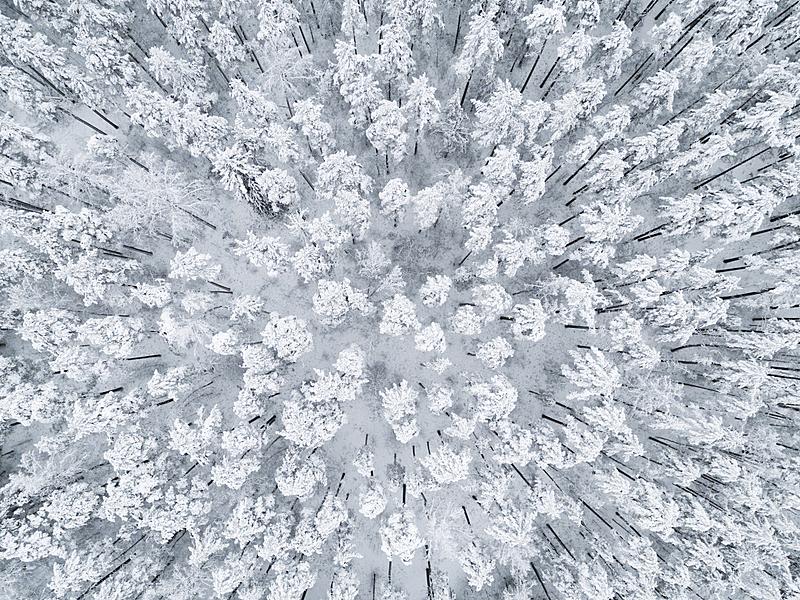 无人机,冬天,看风景,松木,雪,地形,森林,航拍视角,纹理,公园