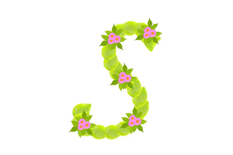 叶子,英文字母s,华丽的,清新,字母,装饰物,植物,创造力,文字,正字符号