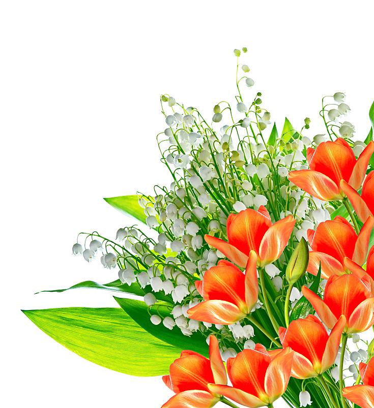 郁金香,春天,铃兰,垂直画幅,美,复活节,边框,夏天,时间,生日