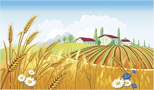 小麦,田地,地形,农业,让路标志,景观设计,面包,食品,熟的,农场