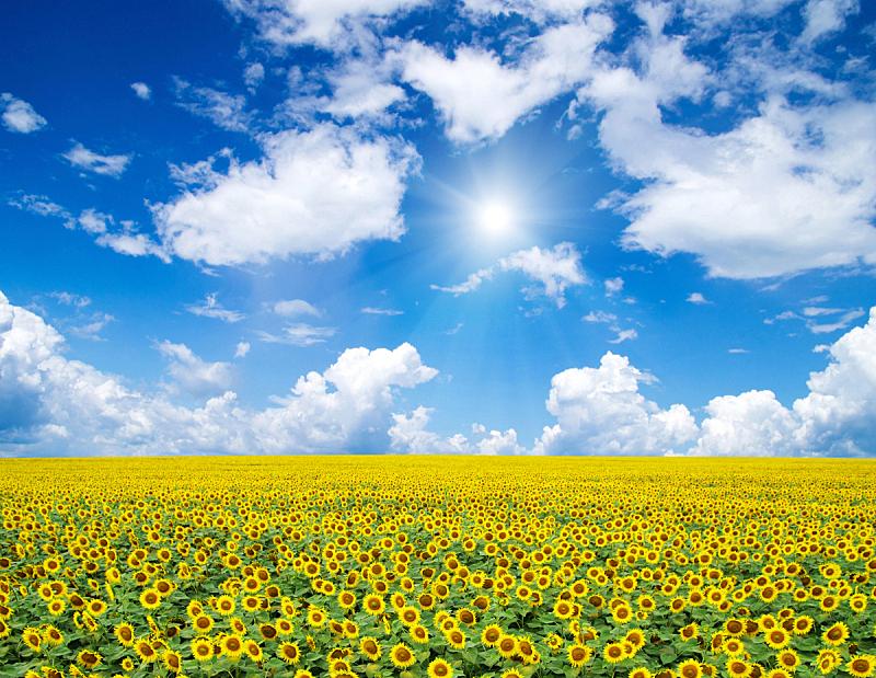 海洋,海浪,波浪,夏天,天空,晴朗,沙子,自然,白昼,乌克兰