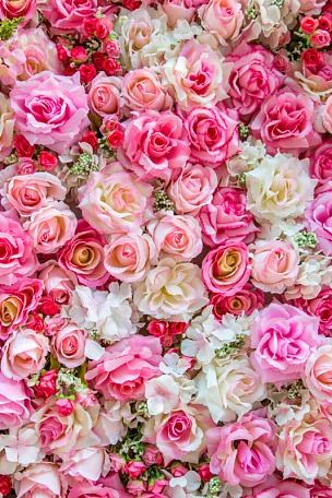 玫瑰,背景,柔和,彩色图片,花束,情人节卡,花纹,粉色,情人节,婚礼