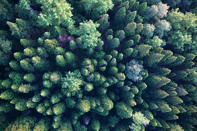 害羞,木制,抽陀螺,角度,顶部,松树,视点,森林,山顶,环境保护