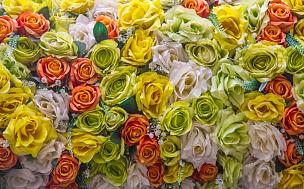 特写,背景,抽象,仅一朵花,自然,式样,水平画幅,无人,紫苑,夏天