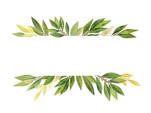 分离着色,白色背景,月桂树叶,水彩画,灌木,枝繁叶茂,草本,水彩画颜料,花环,草药