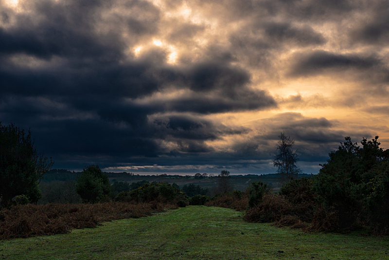 乌云,在上面,新森林,农业,暗色,云,草,色彩鲜艳,暴风雨,车道