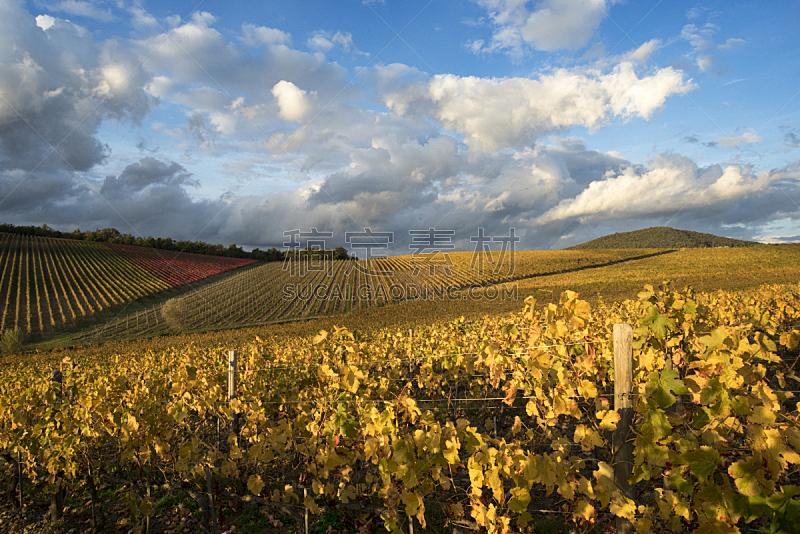 田地,葡萄园,秋天,托斯卡纳区,天空,水平画幅,山,无人,户外,农作物