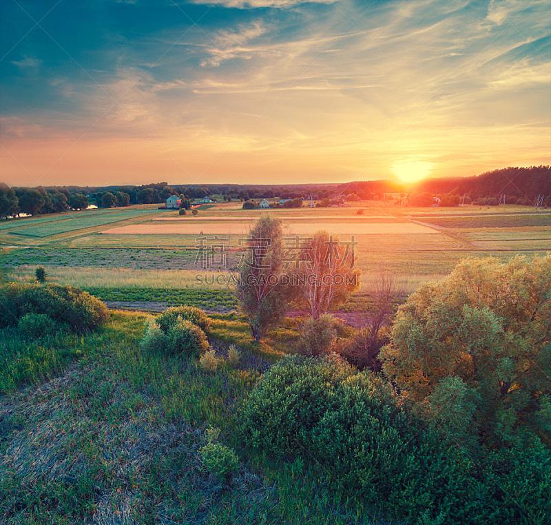 田地,松树,黄昏,航拍视角,森林,美,褐色,水平画幅,纹理效果,无人