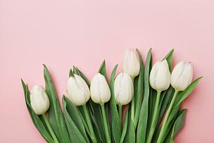 郁金香,女人,母亲节,春天,平铺,贺卡,留白,高视角,古典式,早晨