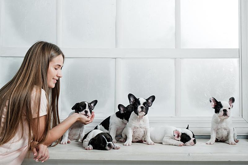 小狗,幼小动物,女孩,大群动物,法国斗牛犬,自然美,可爱的,篮子,纯种犬,肖像