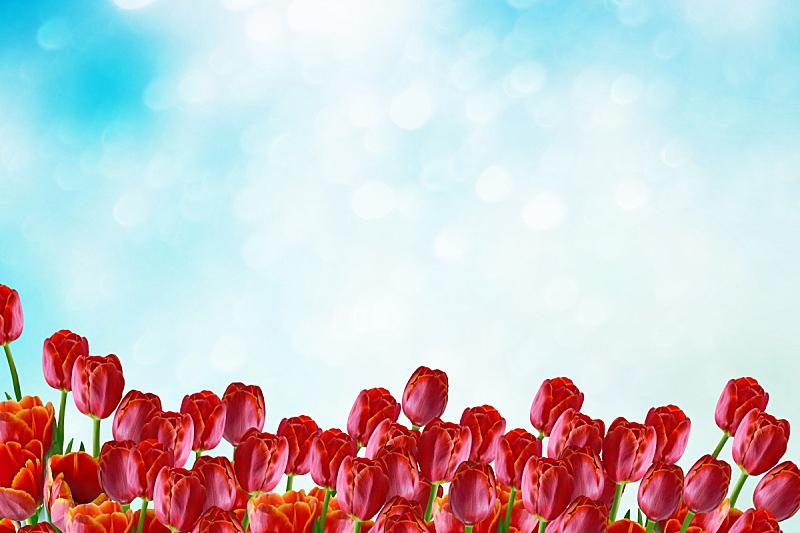 郁金香,多色的,明亮,清新,草,春天,背景,夏天,天空,植物茎