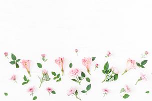 仅一朵花,粉色,白色背景,国境线,平铺,贺卡,留白,高视角,古典式,夏天
