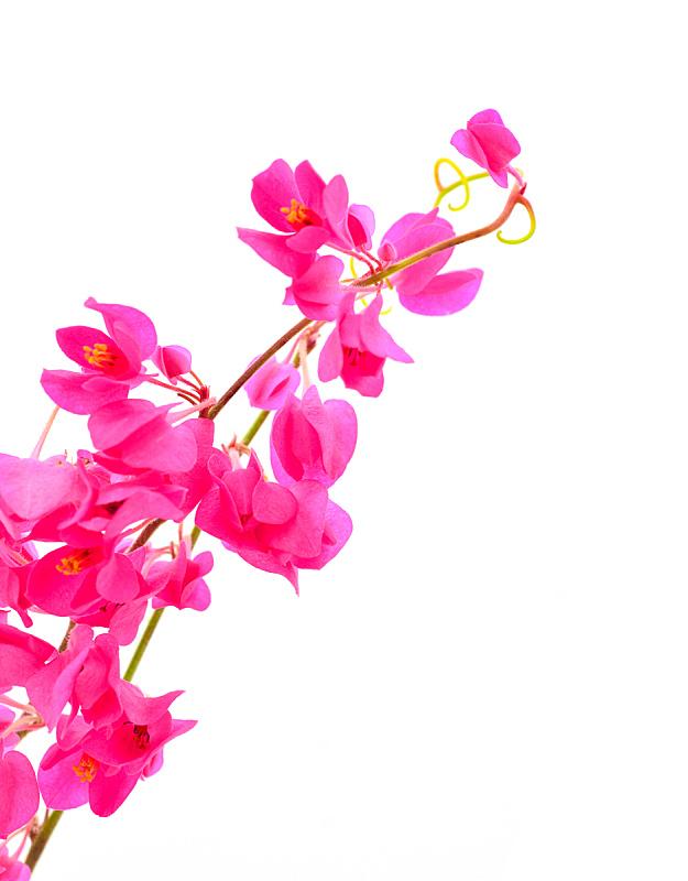 项链,自然,垂直画幅,芳香的,无人,特写,植物茎,爱,反射,装饰