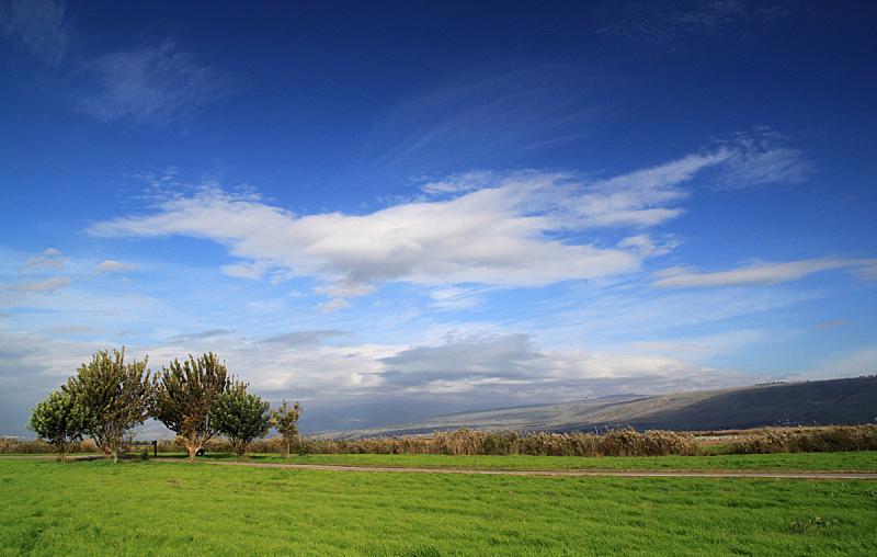 草,蓝色,天空,深的,绿色,田地,自然,白昼,季节,清新