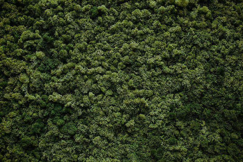 苔藓,自然,墙,水平画幅,纹理效果,无人,户外,草,活力,俄罗斯