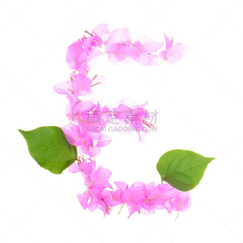 字母,三角梅,白色背景,分离着色,英文字母e,人造的,形状,性格,夏天,单词