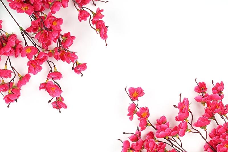 春节,留白,水平画幅,无人,白色背景,红色,李子,传统节日,枝,装饰