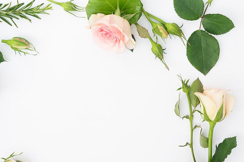 园林,清新,玫瑰,纸牌,周年纪念,背景分离,边框,花,问候,爱
