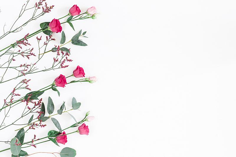 在上面,桉树,粉色,枝,平铺,视角,留白,边框,艺术,水平画幅