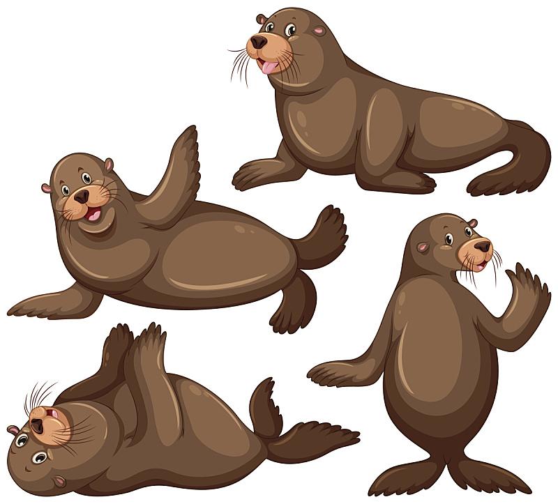 海狮,注视镜头,四只动物,可爱的,自然,一个物体,野生动物,图像,生活方式,海洋