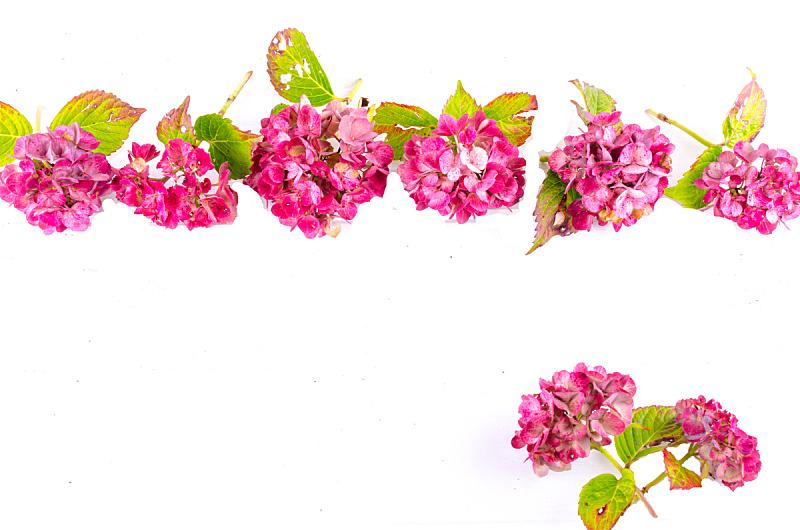 背景,仅一朵花,自然,太空,褐色,水平画幅,木制,水果,无人,玫瑰