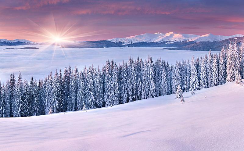 冬天,山,自然美,天空,水平画幅,雪,无人,早晨,圣诞树