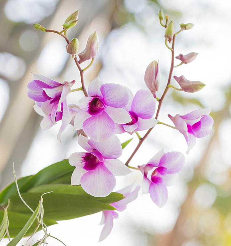 兰花,自然,垂直画幅,公园,地形,景观设计,无人,户外,自然美,植物